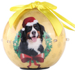 (Bernese) Dog Collection Twinkling